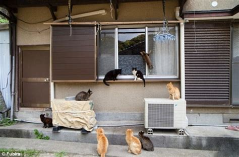 cat island japan it s like that quot cat lady quot but an welcome to cat island the japanese fishing village where
