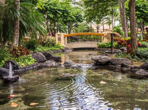 koi pond bridge free photo pond resort bridge koi pond free image on