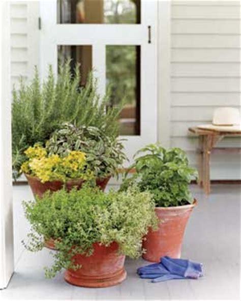 easy container gardens treadgold balcony gardens where does your garden grow