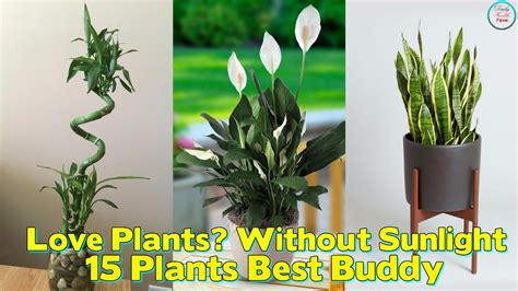 best plants for no sunlight love plants but no sunlight these 15 plants can be your
