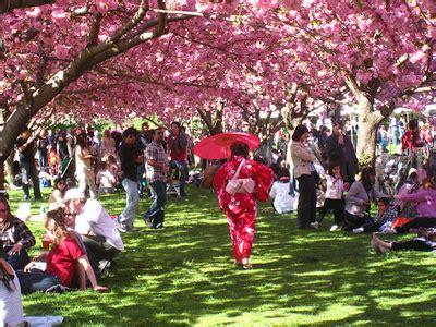 The Cherry Blossom Festival At Bbg Brooklyn Botanic Botanical Garden Cherry Blossom Festival