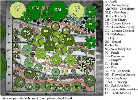 Fruit Garden Layout Food Garden Layout Vanityset Info