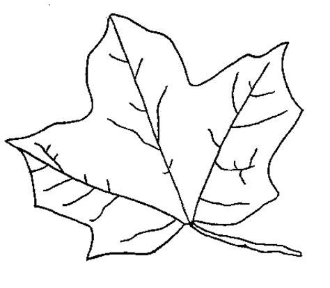big leaf coloring pages 葡萄叶简笔画 葡萄叶子简笔画大全 小花简笔画图片大全图片大全