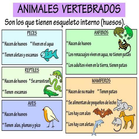 imagenes animales invertebrados para imprimir 10 dibujos para colorear de animales invertebrados y