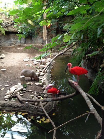 1000 Images About Mesker Zoo Wedding On Pinterest Zoos Mesker Park Zoo Botanic Garden