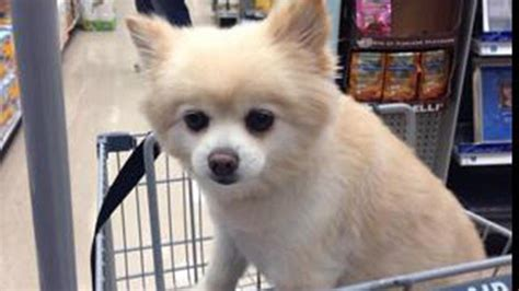local pet stores that sell puppies photos local pets at pet friendly stores 6abc