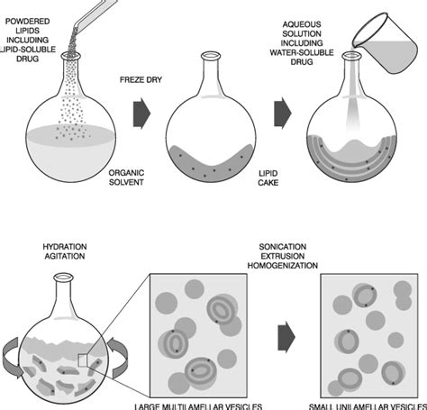 hydration synthesis liposome preparation avanti polar lipids
