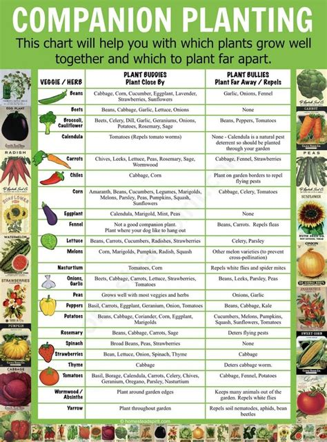 gardening hydroponics learn the amazing of growing fruits books best 25 hydroponics ideas on hydroponic