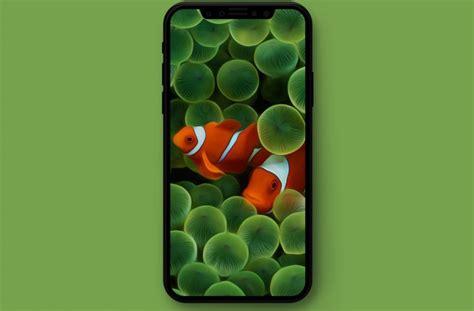 original apple wallpapers optimized  iphone