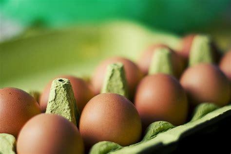 georgina verbaan vegan desmistificando os ovos mitos fatos colesterol e dieta