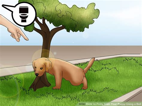 how to to use potty bell how to potty your puppy using a bell with pictures