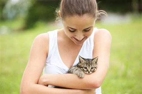 adopting a tips 7 important tips for adopting a stray cat