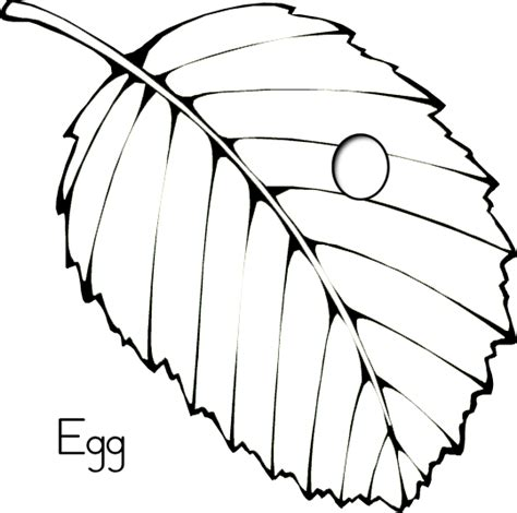 butterfly egg coloring page insectes pinterest