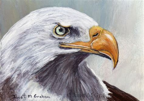 acrylic painting eagle janet m graham s painting bald eagle aceo in acrylics