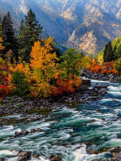colorful forest rapid river ipad wallpaper