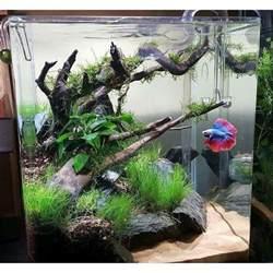 fish tank aquascaping best 25 betta tank ideas on pinterest betta fish tank