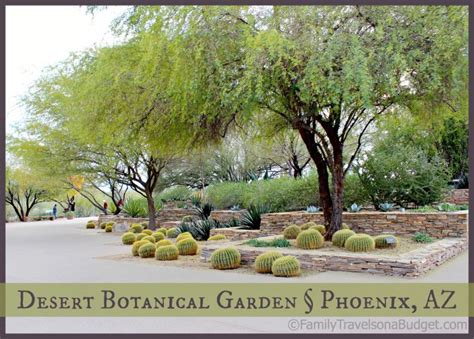 desert botanical garden desert botanical garden family travels on a budget