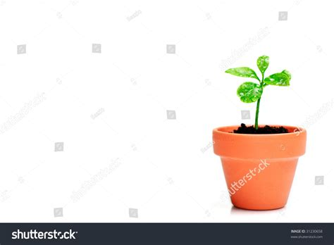 small potted plant isolated on white stock photo image little plant in small flower pot isolated on white