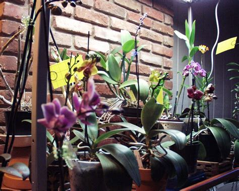 led grow lights for orchids orchid collection t5 high output fluorescent grow
