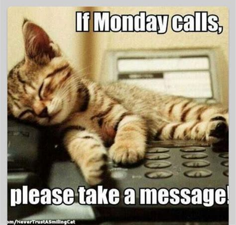 Monday Cat Meme - monday pets funny cats gorgeous critters pinterest