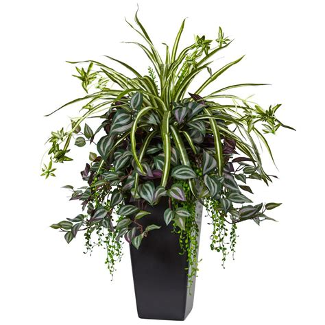 black indoor planter nearly indoor wandering and spider plant in