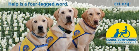cci dogs canine companions for independence event pet express