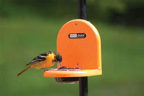 untitled document www wildbirdbackyard com