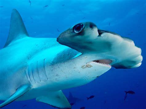 imagenes animales de mar im 225 genes de animales del mar taringa