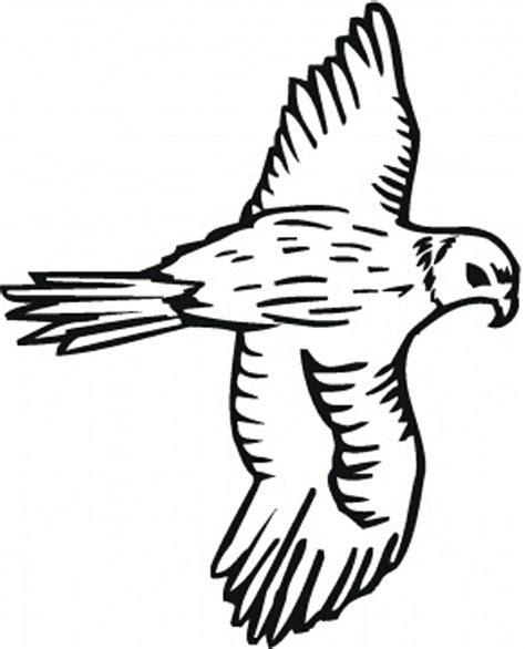 coloring page falcon bird 12 best coloring pages images on pinterest coloring