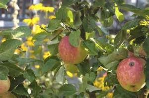 keeping fruit trees small how to keep worms out of fruit trees