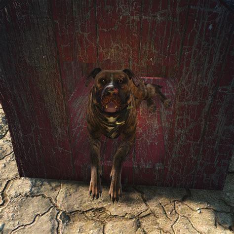 junkyard dogs image fo4 junkyard brown jpg fallout wiki fandom powered by wikia