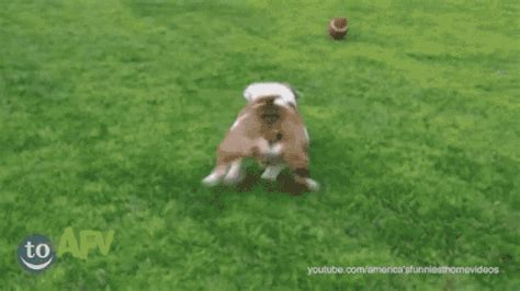 puppy fails puppy fail gif find on giphy