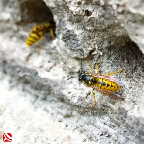 how to get rid of wasps in house siding how to get rid of wasps in my house quora