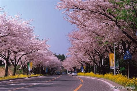 Dunia Unik Gantungan Kunci Negara Korea 10 gambar pemandangan cantik di dunia yang menakjubkan gambargambar co