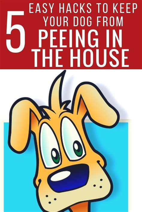 dogs keep peeing in the house 1000 ideas about dog pee on pinterest pet urine cat urine remover and cat urine