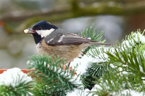 how to help birds in winter willow ridge knoxville