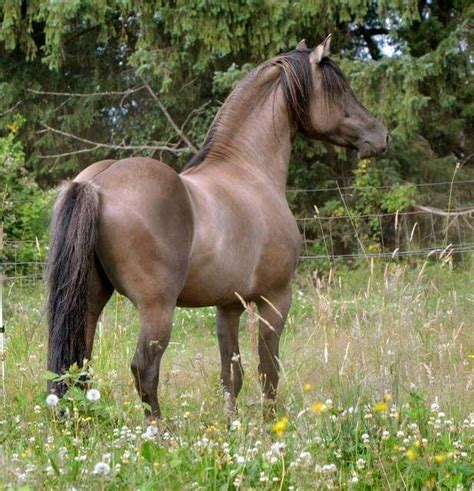 pictures mustang horse with smoke 136 best images about wild mustangs on pinterest mustang