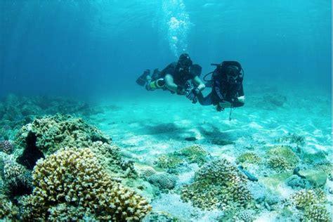 padi dive padi open water diver divers uae