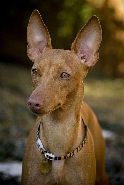 the dog house calhoun ga temperament of calhoun dogs dog breeds picture