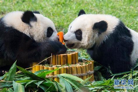 Panda Garden by Home Www Giantpandaglobal