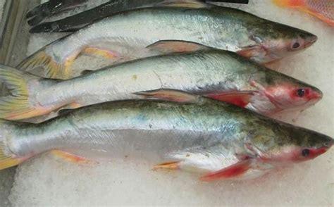 come si cucina il pangasio surgelato carrefour mette al bando il pangasio 171 un pesce allevato