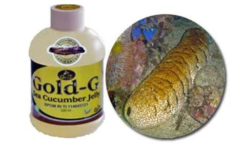 Obat Jelly Gamat obat kolera paling aman obat zakar bengkak sebelah
