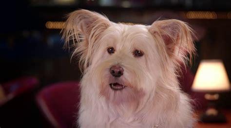 pup better 2gether pup better 2gether 2017 avaxhome