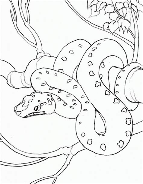 green tree coloring page realistic snake on a tree coloring page famous people