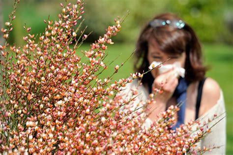 alimenti antistaminici naturali 11 antistaminici naturali e la dieta anti allergia