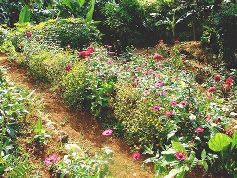 cut flower garden mambulaoans worldwide buzz cut flower garden project donation