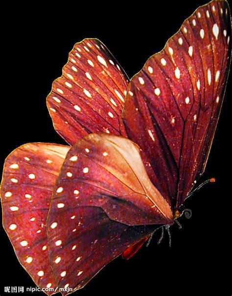 Gw 244h Butterfly 美丽的蝴蝶 butterfly设计图 图片素材 其他 设计图库 昵图网nipic