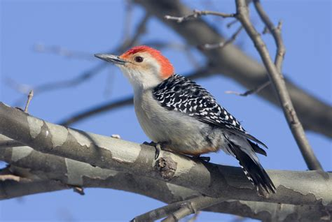 Great Backyard Bird Count by Great Backyard Bird Count At The Trailside Center