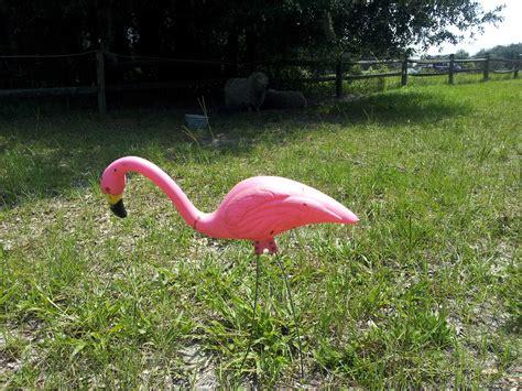 pink flamingo lawn ornaments 20120630 152637 84aa01bdbe4b4a72ae00fa6a5abc89eab1b21b42