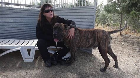 mujer con un perro mas grande perros de protecci 243 n para mujeres maltratadas